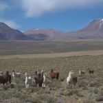 CHILE,BOLIVIA,BRASIL 1 116